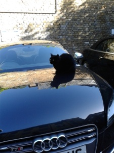 picture of a cat on a black audi car