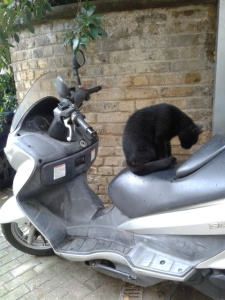 cat on a scooter