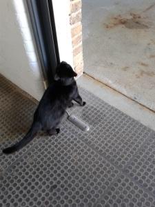 picture of cat investigating door frame