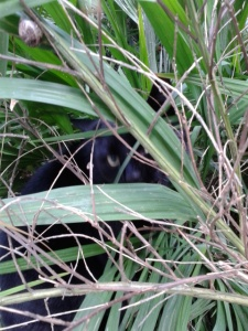 picture of a cat hiding in the long grass