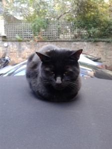 picture of Cat on a soft top car