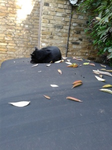 picture of a cat asleep in leaves on a car