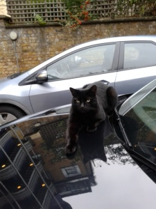 picture of a cat on a clean black car