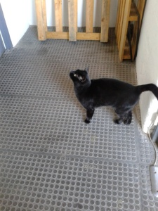 picture of a cat in the corridor about to spring