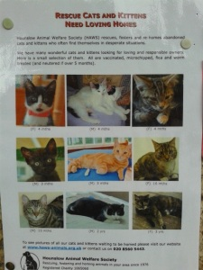 picture of a kitten adoption poster