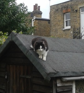 picture of Pippa on the garden shed