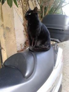picture of a cat sitting on a Scooter