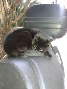 Picture of a cat on a scooter seat