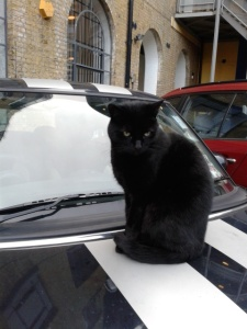 picture of a cat on the hood of a mini car