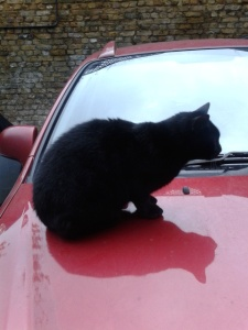 picture of a cat on a red car