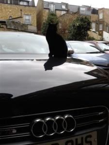 Back on guard duty on my shiny Audi