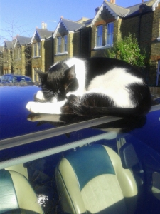 black and white cat asleep on a car roof