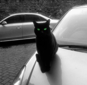 picture of a green eyed cat