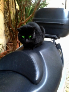 picture of a cat on a scooter